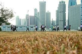 Dead grass seen around Singapore as the longest dry spell ever recorded in the country takes its toll