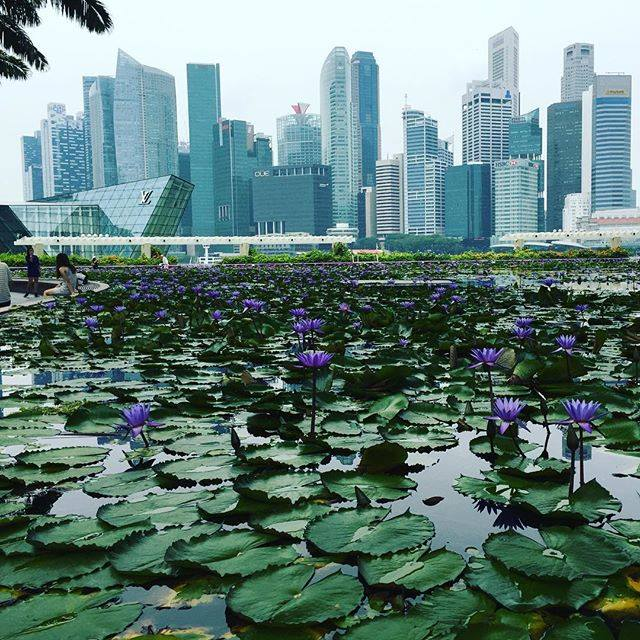 Beautiful City of Singapore (Dr Vivian Balakrishnan)